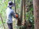 Thủ tướng chỉ lệnh không chuyển đổi rừng Tây Nguyên!