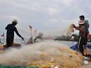 """""""Cấm biển"""": Ngư dân bất chấp"""