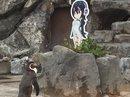 """Nhật khóc thương chim cánh cụt tương tư """"người tình hoạt hình"""" qua đời"""