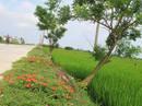 Ngỡ ngàng những con đường hoa rực rỡ làng quê miền Bắc