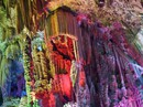 Trung Quốc: Du khách phá hoại măng đá vôi ngàn năm trong vài giây