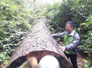 Chi tiền tỉ bảo vệ, rừng vẫn mất