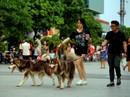 Chó thả rông: Ai phạt, phạt ai?