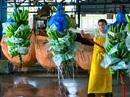 Giấc mơ về ngành công nghiệp chuối