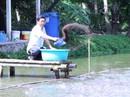 Thu nhập cao nhờ nuôi ghép cá