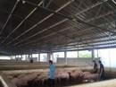 'Thủ phủ' nuôi heo tạm dừng dự án chăn nuôi heo