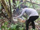 Đề nghị tạm dừng dự án xóa rừng để nuôi bò