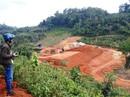 Loại bỏ thủy điện phá rừng