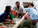 An Giang bỏ lệnh cấm khai thác cá linh non