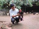 """""""Vua gà"""" Đông Tảo ở Hưng Yên"""