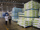 Thức ăn chăn nuôi: Việt Nam thua trắng khâu nguyên liệu