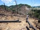 Thủ tướng yêu cầu điều tra vụ phá rừng ở Quảng Nam