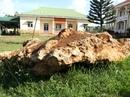 Bàn giao tảng đá bán quý 20 tấn về khu dự trữ sinh quyển Langbiang