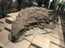 2017: Năm của các quái thú kỷ Jura