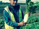 Người Việt làm giàu bằng nghề nông trên đất Úc