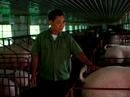 Lên núi thả cá, nuôi lợn, lão nông 71 tuổi thu 20 tỉ đồng/năm