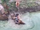 """Du khách """"sốc"""" cảnh cọp xé xác lừa trong sở thú Trung Quốc"""