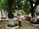 """Bí mật về 4 """"cụ cây"""" 700 tuổi ở Đồng Tâm"""