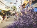 Sắc màu bình dị tại chợ hoa lớn nhất Sài Gòn