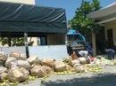Tiêu hủy ngay 66 tấn xoài nhập lậu từ Campuchia