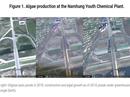 """Triều Tiên dùng """"vàng xanh"""" khắc phục hậu quả bị trừng phạt"""