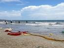 Hải sản chết bất thường trên vùng biển Vĩnh Tân, Vĩnh Hảo