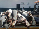 Mexico: Phát hiện 300 xác cá mập chất đống dọc đường