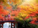 Xin visa Nhật qua công ty du lịch