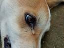"""Lạ lùng với """"người tốt"""" chữa chó bị bả chết ngoài đường"""