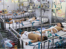 Phòng dịch bệnh: Địa phương gặp khó khăn trong quản lý đối tượng vãng lai, khu nhà trọ