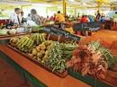 """Nông nghiệp organic """"cứu"""" Cuba"""