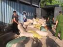 Phát hiện hơn 10 tấn ngà voi và vảy tê tê nhập lậu