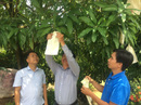Thú vị dịch vụ trồng cây qua mạng