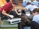 """Giải cứu gấu chó bị """"giam cầm"""" 16 năm tại thác Prenn Đà Lạt"""