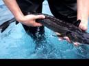 Trung Quốc ngừng xây cầu vì làm chết 6.000 con cá hiếm