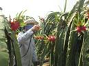 Bảo vệ môi trường cho nông sản sạch
