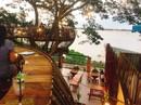 'Sống ảo' trong tiệm cà phê trên cây ở Cần Thơ
