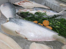 Người Nhật khen cá tra Việt Nam ngon như cá hồi nhưng người Việt lại chê