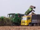 Đồng hành hỗ trợ, duy trì lợi nhuận cho nông dân