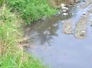 Các trại heo đe dọa nguồn nước
