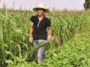 """Tiến sĩ """"rủ nhau"""" về quê làm nông nghiệp organic"""