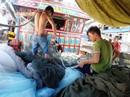Ngư dân đón Tết giữa trùng khơi