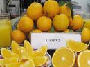 Đặc sản Tết: Cam V2 được chăm sóc đặc biệt, ngọt chín vàng óng