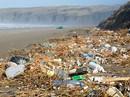 Tràn lan cá biển nhiễm nhựa độc
