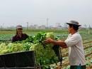 Những nông sản rớt giá thê thảm sau Tết Nguyên đán