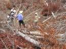 Cảnh cáo trưởng công an huyện dính líu phá rừng