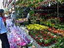 Hoa kiểng Tết đổ về TP HCM
