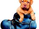 Trung thành như Chó