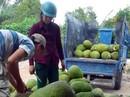 Thương lái Trung Quốc đang lùng mua gì ở Việt Nam?