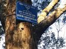 Độc đáo đường tùng cổ 700 tuổi giữa non thiêng Yên Tử